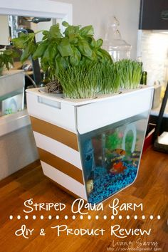 Aqua Farm - Living Savvy: Simple DIY & Product Review |