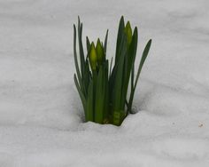 il risveglio della primavera