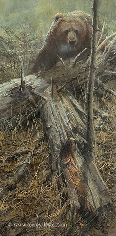 Dead Fall - Wildlife Art of John & Suzie Seerey-Lester Wildlife Paintings, Wildlife Art, Animal Paintings, Animal Drawings, Horse Drawings, Ours Grizzly, Hunting Art, Bear Art, Outdoor Art