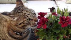 Noooo, les floretes nooooo!!