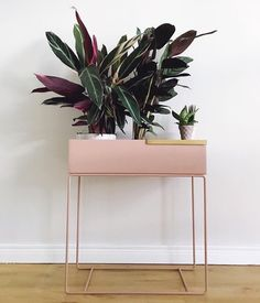 Pretty in pink! How gorgeous is this photo by 👈🏻 Featuring the Ferm Living Large Plant box in rose, available online from our… Garden Front Of House, House Front, Living Room Plants, Home Living Room, Large Plants, Green Plants, House Seasons, Plant Box, Plant Lighting