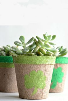 Brighten up your home and get in the St. Patrick's Day spirit with these DIY Lucky Succulents! St Pattys, St Patricks Day, Holiday Crafts, Holiday Fun, Holiday Ideas, Irish Roots, All Holidays, Winter Holidays, St Paddys Day