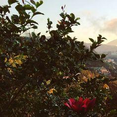 Sara سارة (@harimaguada_) • Fotos y videos de Instagram Instagram, Plants, Continents, Flora, Plant