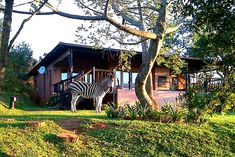 This tranquil and peaceful setting is the ideal location for anything from a romantic getaway to spending quality time with family and friends. Listen to the sound of Fish Eagles crying; enjoy the sight of Zebras and the stunning view of the lake while relaxing on your veranda in your own private splash pool. Lake Cottages are ideally positioned to visit all the beautiful places on the Panorama Route as well as the Kruger Park. Click on pic to see more. Kruger National Park, Holiday Accommodation, Lake Cottage, Romantic Getaway, Stunning View, Zebras, Quality Time, Eagles, Crying