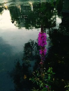 My Photos, River, Photography, Outdoor, Fotografia, Outdoors, Fotografie, Rivers, Photo Shoot