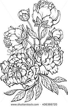 Květiny Rostliny Kresba Ilustrace a kresby | Shutterstock