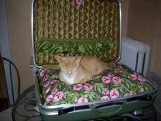 Vintage Suitcase Pet Bed. Cool Idea but not big enough for my Labrador!! LOL