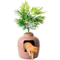 Product: Litter box enclosure. Construction Material: Polypropylene. Color: Natural. Features:  Large capacity pot great for large cats and multi-cat households. Filtered vented system works to control dust and odor. Dimensions:  38 H x 19  $57