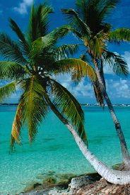 Palm trees near beach in Nassau, Bahamas