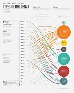 Types of Influenza Visualisation, Data Visualization, Sankey Diagram, Infographic Examples, Process Chart, Information Visualization, Design Theory, Poster Design Inspiration, Information Design