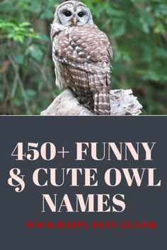 450 Funny And Cute Owl Names Owl Harry Potter Pet Names Harry Potter Owl Name