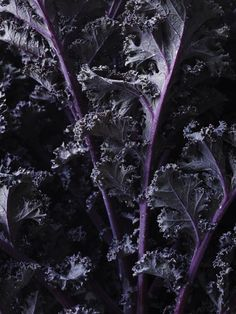 Green and red kale – Weyoutheyate Red Kale, Grubs, Food Styling, Food Photography, Cabbage, Vegan, Vegetables, Inspiration, Ideas