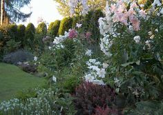 With white garden phlox (Phlox paniculata) and Asian lilies creating height; white sage (Salvia) and dwarf barberry (Berberis thunbergii) in the foreground, the Scent garden is a sight to behold (and smell to inhale!).