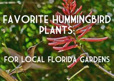 Here is the list of the best plants to feed and invite hummingbirds to your garden.   In both spring and fall, Florida provides important feeding areas for hummingbirds who fly across the Gulf to southern wintering sites or back across the Gulf on their way to summer nesting sites in the North. They seek out native plants, their natural food supply, along their migratory routes.  http://www.floridanativeplants.com/gardeningPDFs/HUMMINGBIRDS.pdf