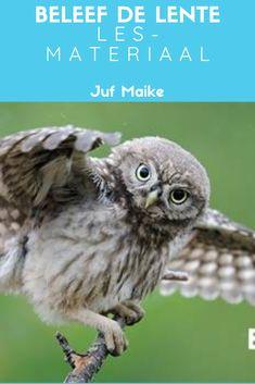 De webcam's van Beleef de lente lestips en lesmateriaal dat je kunt downloaden, zoals cijferkleurplaten van vogels. Owl, Animals, Colors, Animales, Animaux, Owls, Animal, Colour, Animais