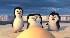 imagenes de pinguinos bebes dibujos