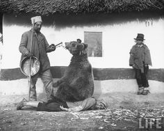 Romania, 1946 - few years ago, I could still see some gypsies walking their bear in the streets