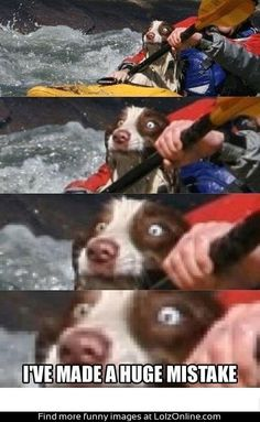 I've made a huge mistake. #dog #pet #humor #funny
