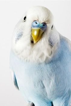 "Parakeet- this looks like our little ""Z"""