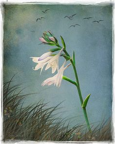 Morning Hosta by Creatography on Etsy, $29.99
