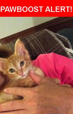 Is this your lost pet? Found in Victoria, TX 77905. Please spread the word so we can find the owner!  Small kitten came into our yard today. Yellow tigerstrip, very lovable so we don't believe it's feral.   John Wayne Trail, Victoria, TX