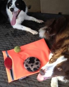 What a perfect use of a NSZ Bag! Now your car won't smell like stinky old dog slobber. Just zip up the frisbee's and tennis balls in a NSZ Bag and no more shocking, terrible smell in the car. Now we just need to work on bad dog breath!