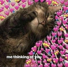 I feel a little better this morning so I'll probably post more:)) Cute Cat Memes, Cute Love Memes, Funny Memes, Pretty Meme, Cute Cats, Funny Cats, Memes Lindos, Flirty Memes, Wholesome Pictures