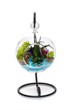 """Air Plant Terrarium Kit with Stand   Ocean Series Blue & Green   Complete Tillandsia Gift Set   4"""" Hanging Glass Globe and Stand   Nautical Crush Trading TM (Artificial Air Plant)"""