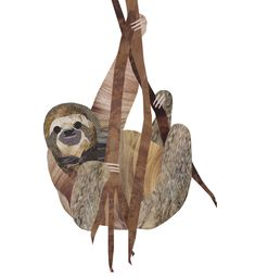 Collage Sloth illustration by wildlife illustrator, Jonathan Woodward. #Collage #Sloth