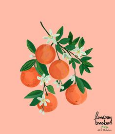 oranges citrus orange fruit clementine kitchen art blossom print wall decor pattern surface design t Painting & Drawing, Gouache Painting, Wall Drawing, Body Painting, Acrylic Painting Lessons, Paper Drawing, Orange Painting, Fruit Painting, Fruit Illustration
