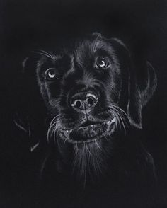 "Képtalálat a következőre: ""turtle drawing on black paper"" beautiful cutest funny wild basteln lustig zeichnen Black Canvas Art, Black Canvas Paintings, Dog Paintings, Art Scratchboard, Kratz Kunst, Animal Drawings, Art Drawings, Drawing Animals, Black Paper Drawing"
