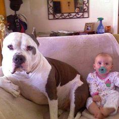 American Pit Bull Terrier  Lou n Zoe 2009 ❤