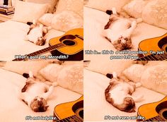 Meredith, Taylor Swift's Cat