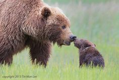 Funny pictures about 25 Of The Best Parenting Moments In The Animal Kingdom. Oh, and cool pics about 25 Of The Best Parenting Moments In The Animal Kingdom. Also, 25 Of The Best Parenting Moments In The Animal Kingdom photos. Tin Man, Animals And Pets, Baby Animals, Cute Animals, Wild Animals, Animal Babies, Wildlife Photography, Animal Photography, Man Photography