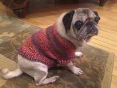 Handmade Knit Warm Dog Sweater for a Pug Body by TheKnittingGnomeVT on Etsy