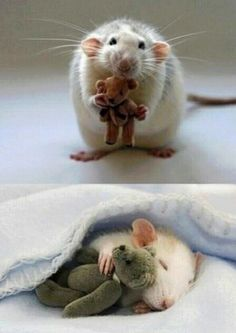 For anyone feeling a bit sad, here's a picture from a woman who makes Teddy Bears for her pet rat