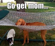Funny Pix, Funny Cute, Funny Images, Funny Dogs, Funny Animal Pictures, Funny Animals, Animal Pics, Adorable Animals, Stupid Cat