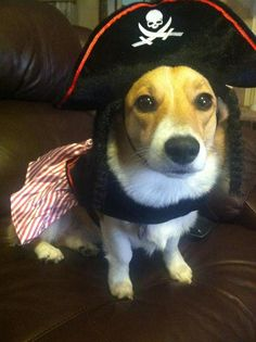 Pirates of the Corgi-bean?
