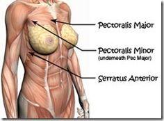 Pectoralis Major, Pectoralis Minor, and Serratus Anterior exercises