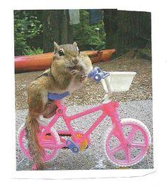 Chipmunkonpinkbike #bicycles, #bicycle, #pinsland, https://apps.facebook.com/yangutu