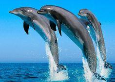 50 Amazing Wildlife & Animal Wallpapers