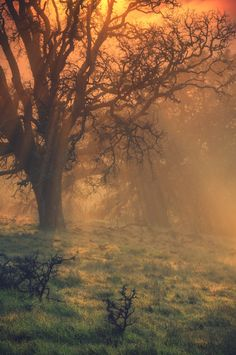 Sun Tree Beam Scene from Mount Diablo State Park, in Northern California. By Vincent James on Flickr