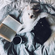 cats and coffee, the best.