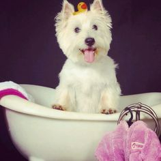 Poster picture by Oprah the westie