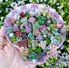 I want too many things. I need to want less.  Unless of course we're talking about. I want and need them all!   #iheartsucculents harddy.com