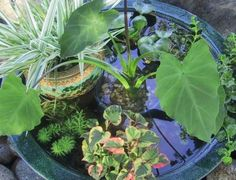 7 Fascinating Low-Budget DIY Mini Ponds In a Pot for your garden