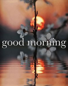 Good Morning, Hello Monday Pictures, Photos, and Images for . Good Morning Picture, Good Morning Flowers, Good Morning Good Night, Good Night Quotes, Morning Pictures, Good Morning Images, Morning Pics, Monday Pictures, Nice Picture