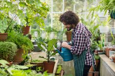 So you just bought or built a greenhouse with the help ofgeneral contracting services in … 8 Best Greenhouse Plants That Are Best for Beginners Read More » The post 8 Best Greenhouse Plants That Are Best for Beginners appeared first on Boots On the Roof.