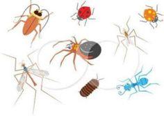 ΘΕΡΑΠΕΥΤΗΣ: Ξεφορτωθείτε κουνούπια, μύγες και μυρμήγκια με φυσ...