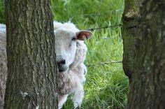 #owce